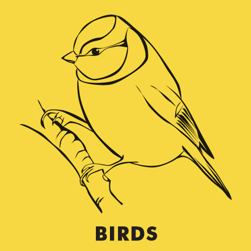 Educational coloring pages for kids - Animals / Birds