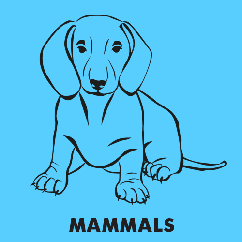 Educational coloring pages for kids - Animals / Mammals
