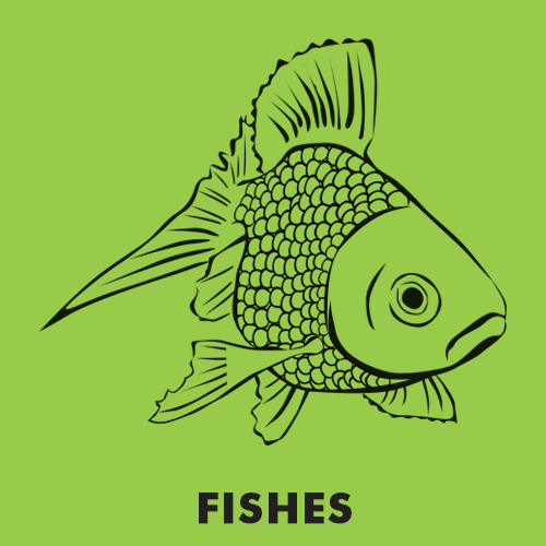 Educational coloring pages - Fishes