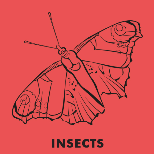 Educational coloring pages - Insects