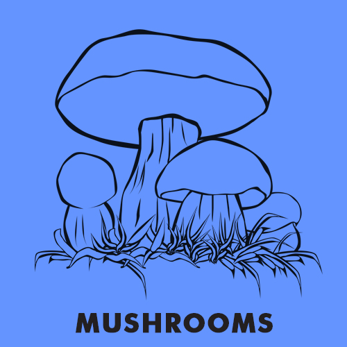 Educational coloring pages - Mushrooms