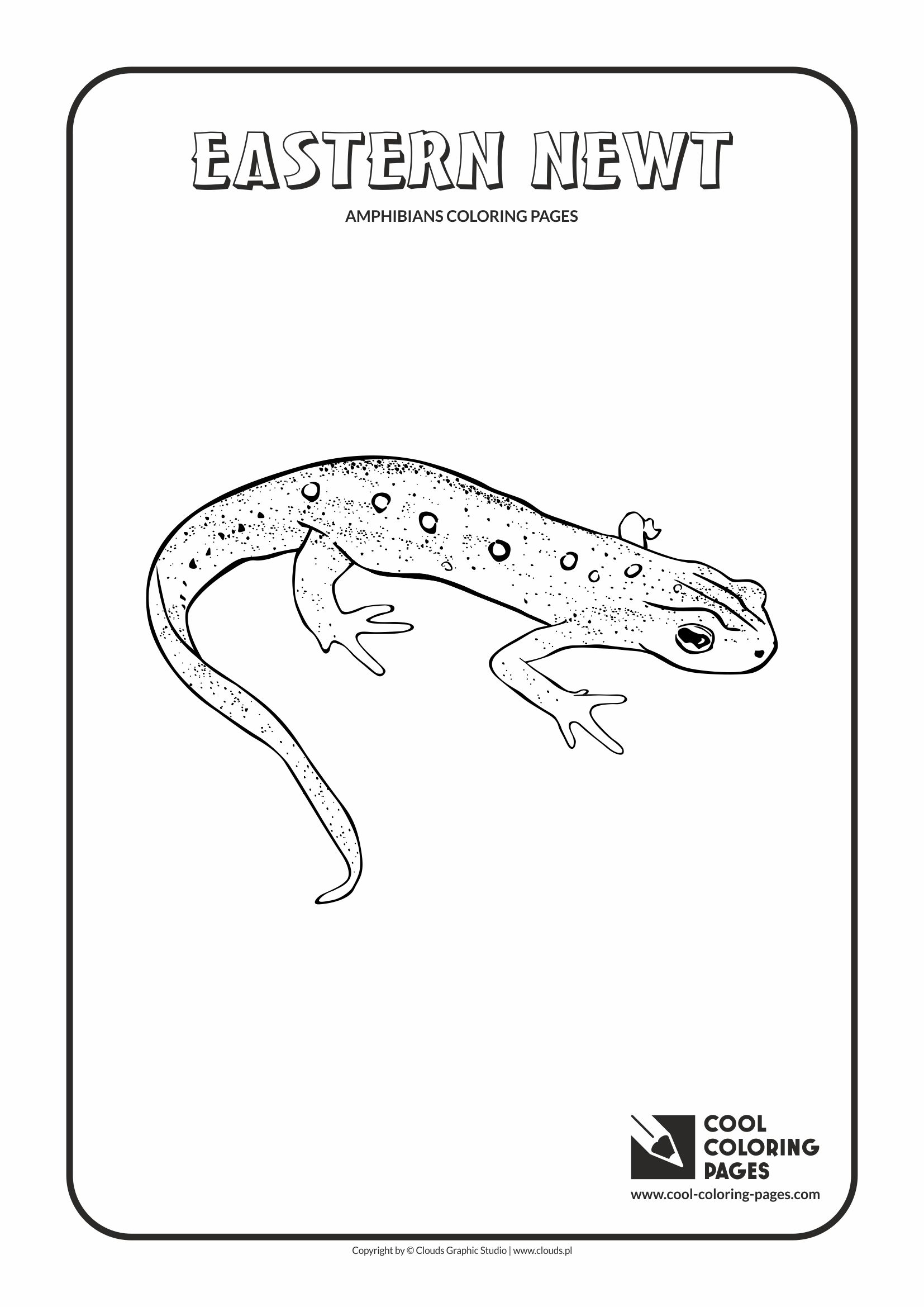 Cool Coloring Pages - Animals / Eastern newt / Coloring page with eastern newt