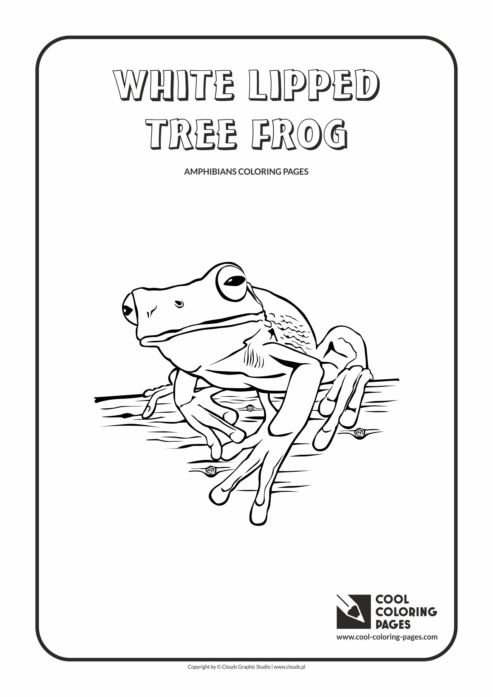 Cool Coloring Pages - Animals / White lipped tree frog / Coloring page with white lipped tree frog