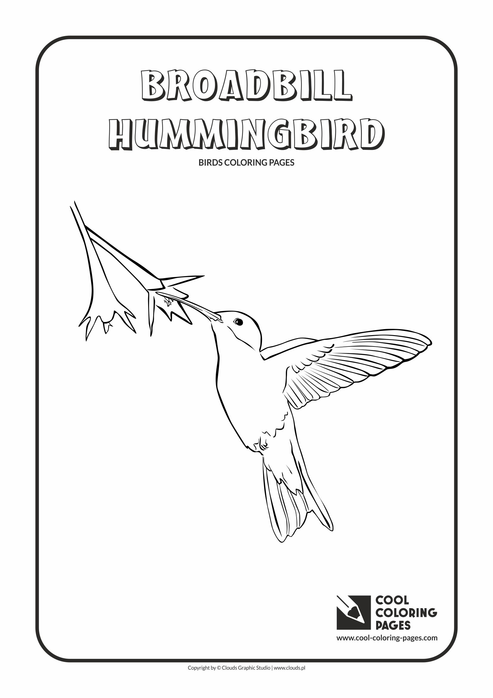 Cool Coloring Pages - Animals / Broadbill hummingbird / Coloring page with broadbill hummingbird