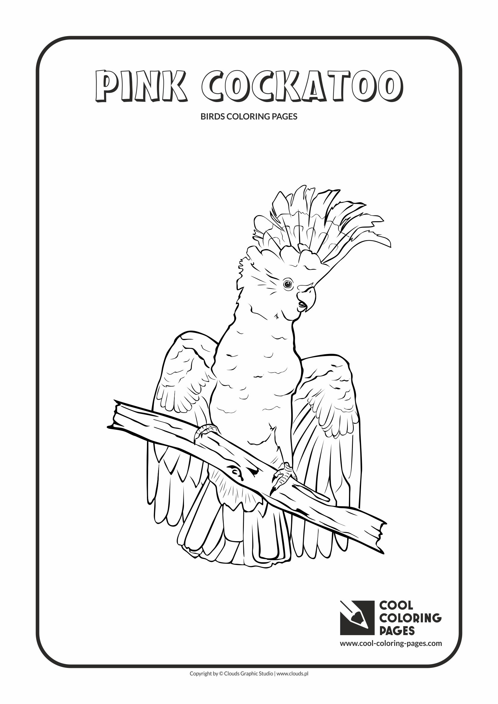 Cool Coloring Pages - Animals / Pink cockatoo / Coloring page with pink cockatoo