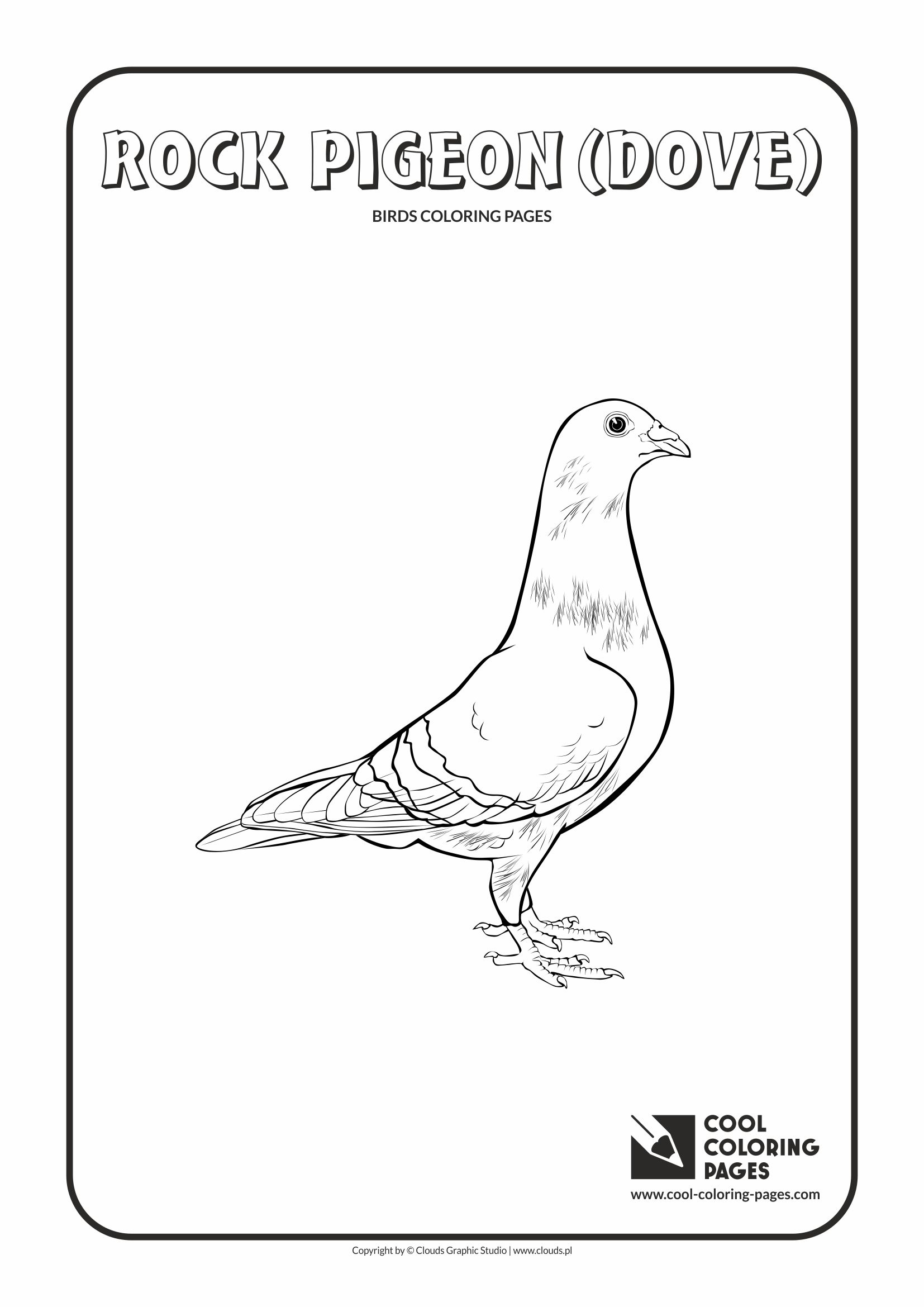 Cool Coloring Pages   Animals / Rock Pigeon / Coloring Page With Rock Pigeon