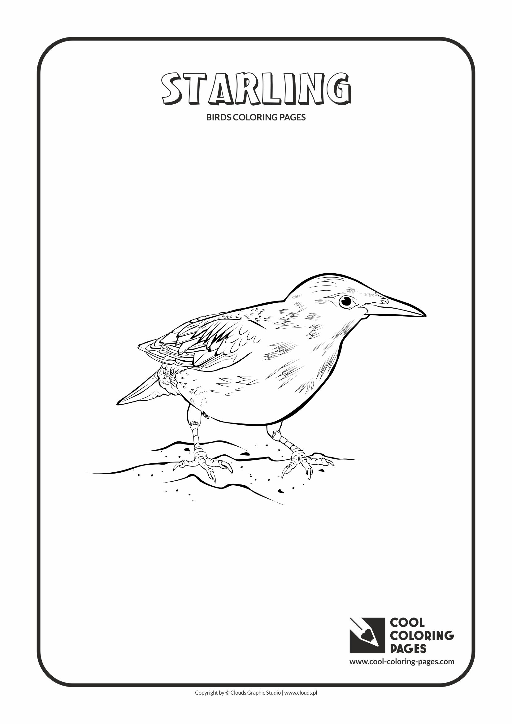 Cool Coloring Pages - Animals / Starling / Coloring page with starling