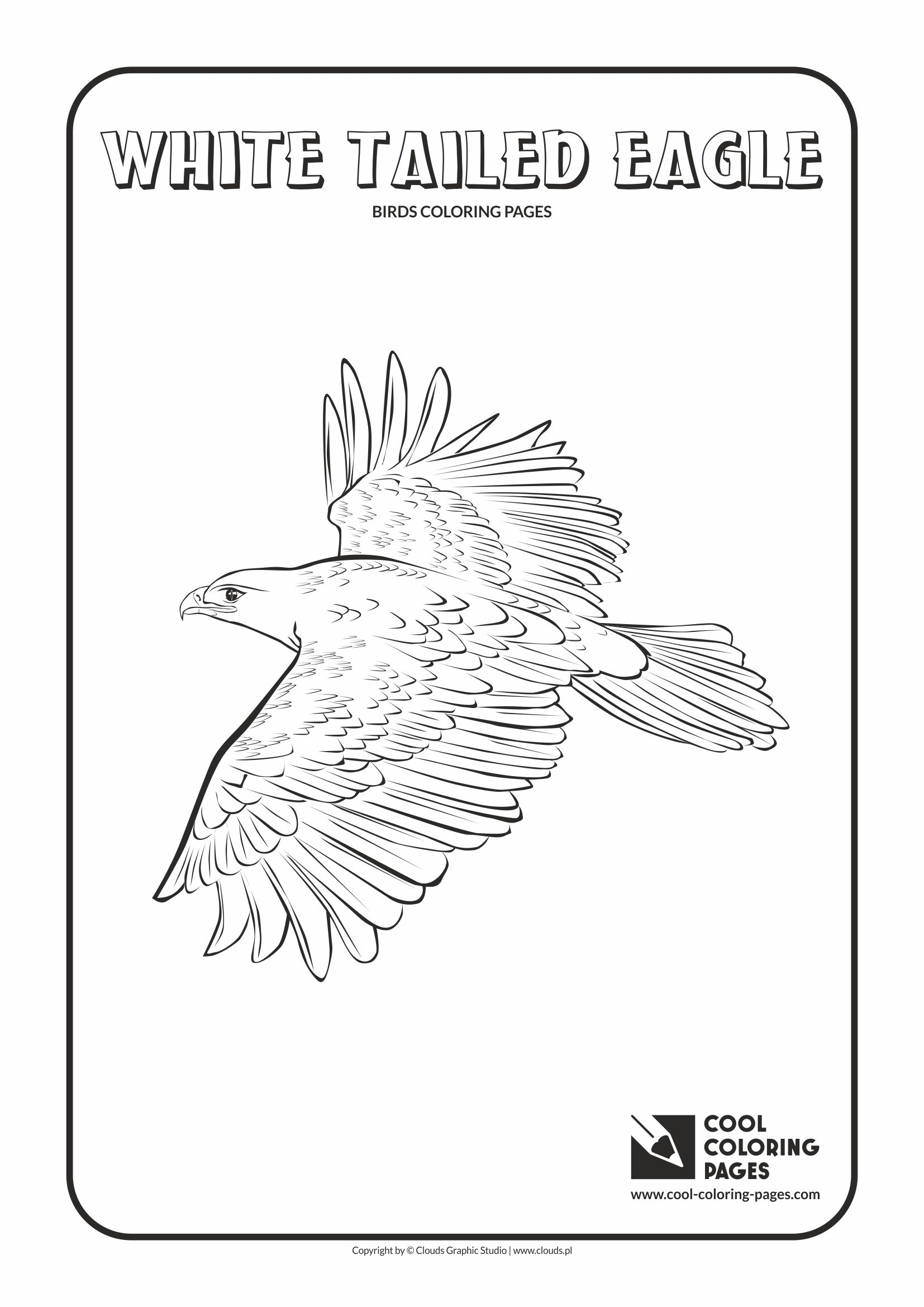 Cool Coloring Pages - Animals / White tailed eagle / Coloring page with white tailed eagle