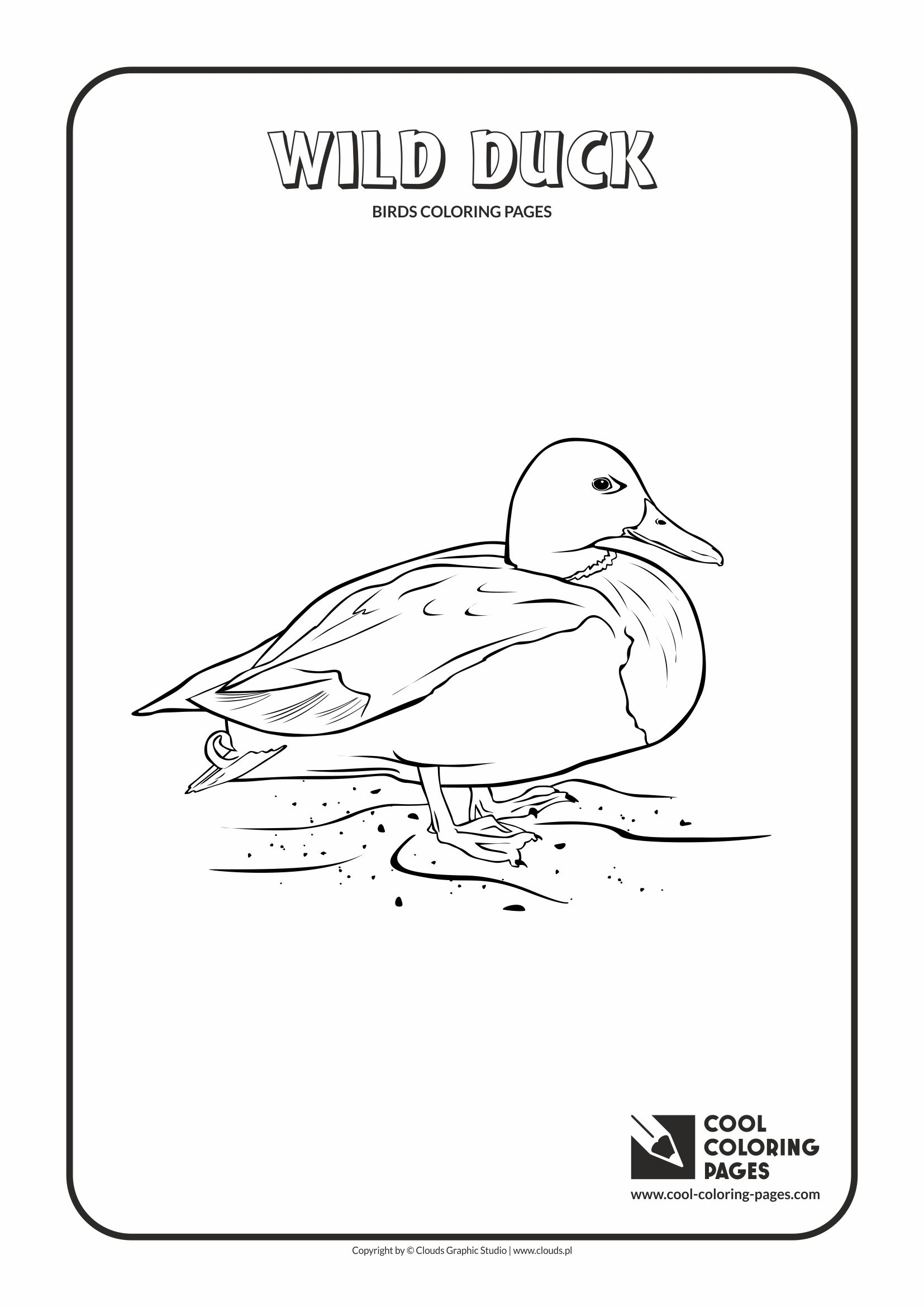 Cool Coloring Pages - Animals / Wild duck / Coloring page with wild duck