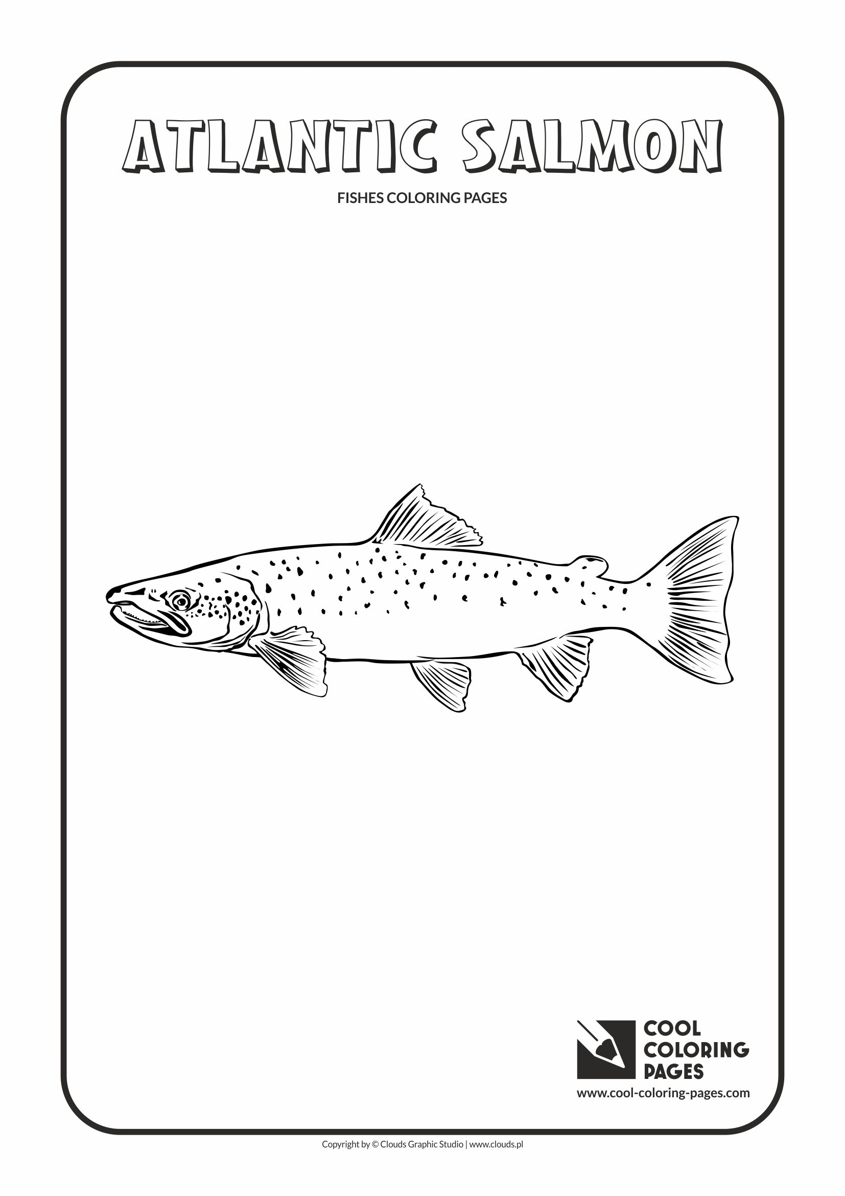 Cool Coloring Pages - Animals / Atlantic salmon / Coloring page with atlantic salmon