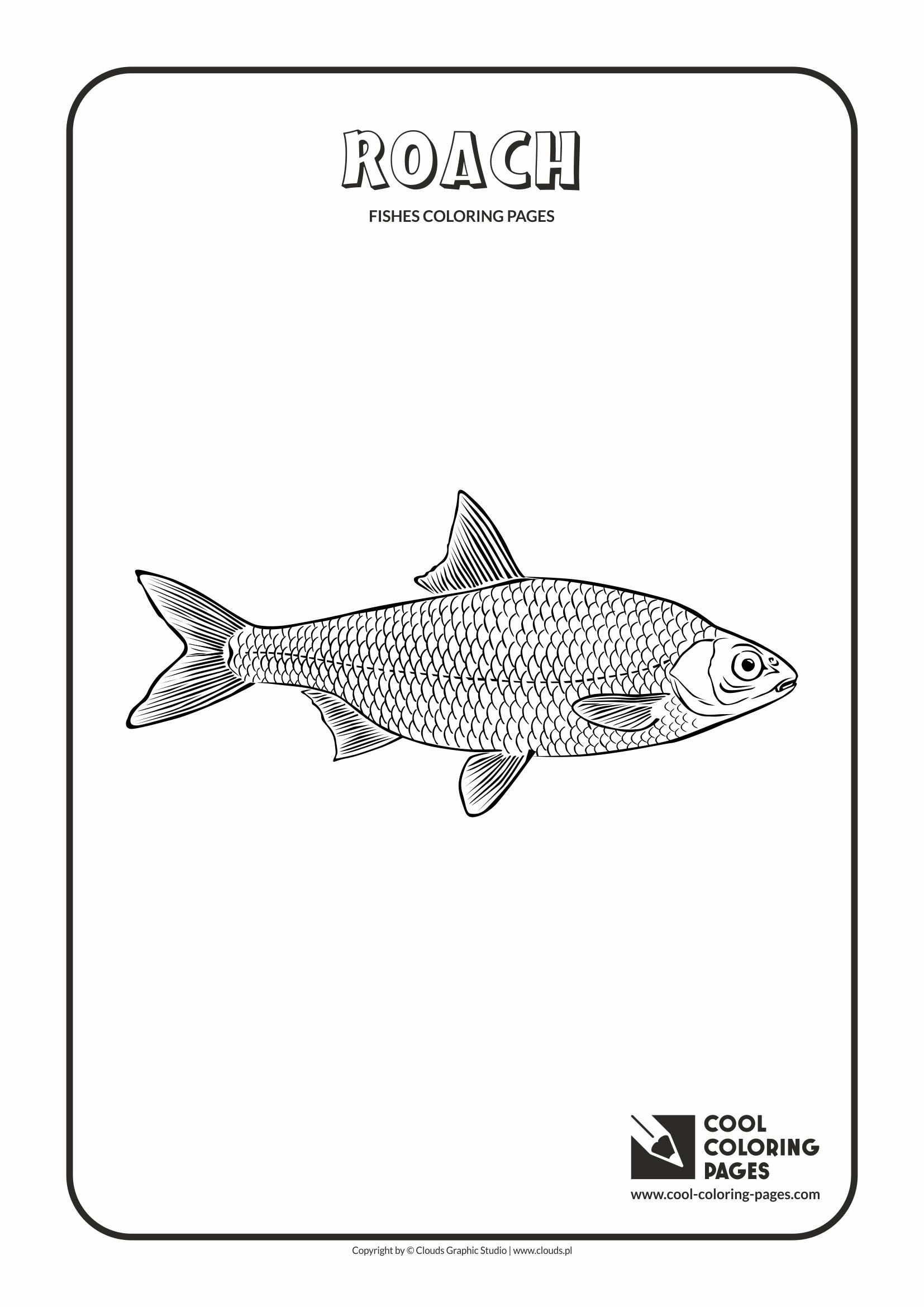 Cool Coloring Pages - Animals / Roach / Coloring page with roach