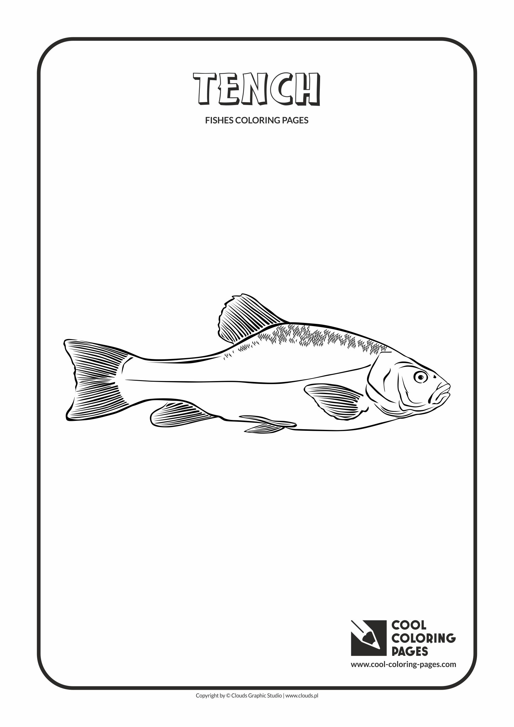 Cool Coloring Pages - Animals / Tench / Coloring page with tench