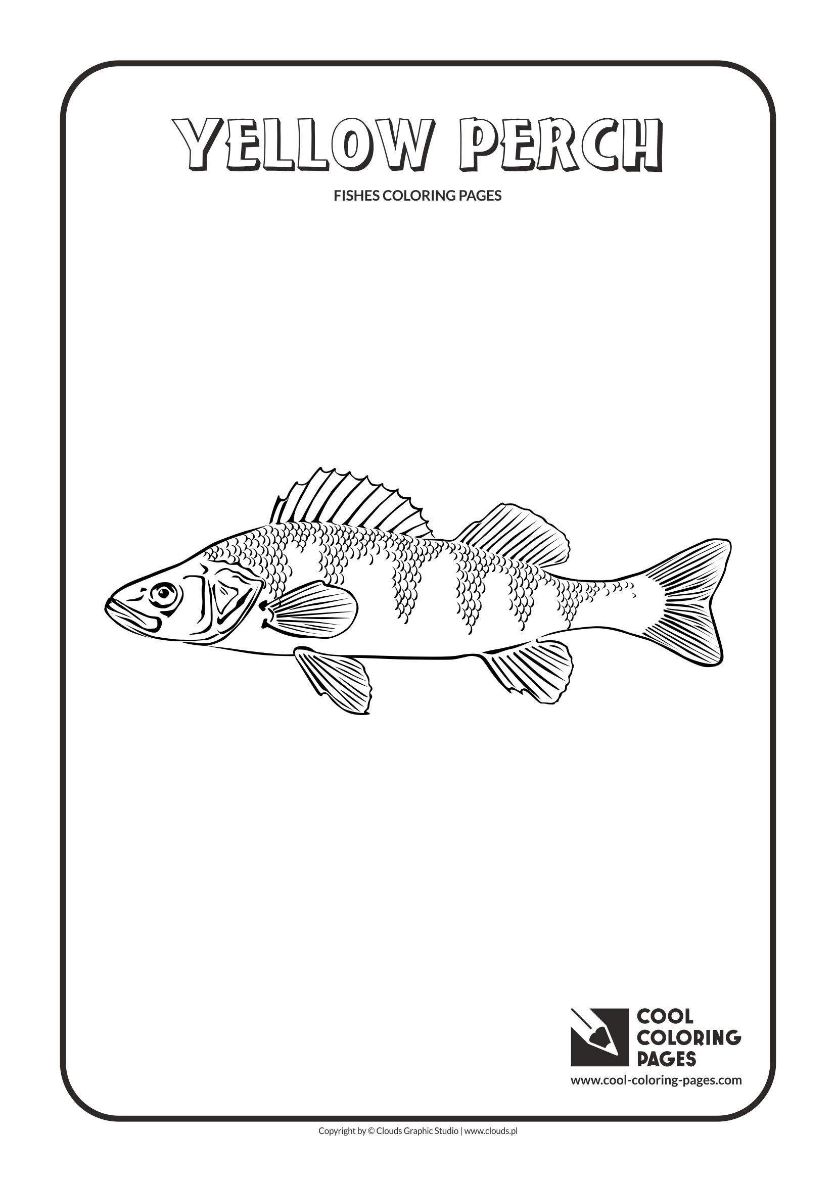 Cool Coloring Pages - Animals / Yellow perch / Coloring page with yellow perch