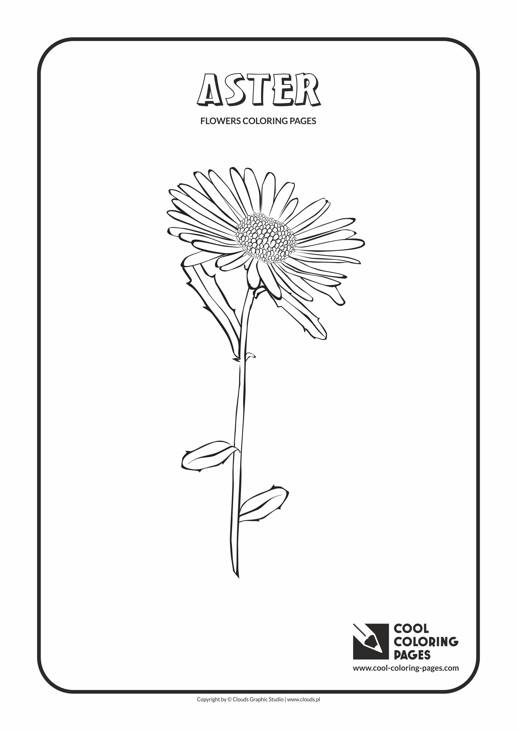 Cool Coloring Pages - Plants / Aster / Coloring page with aster