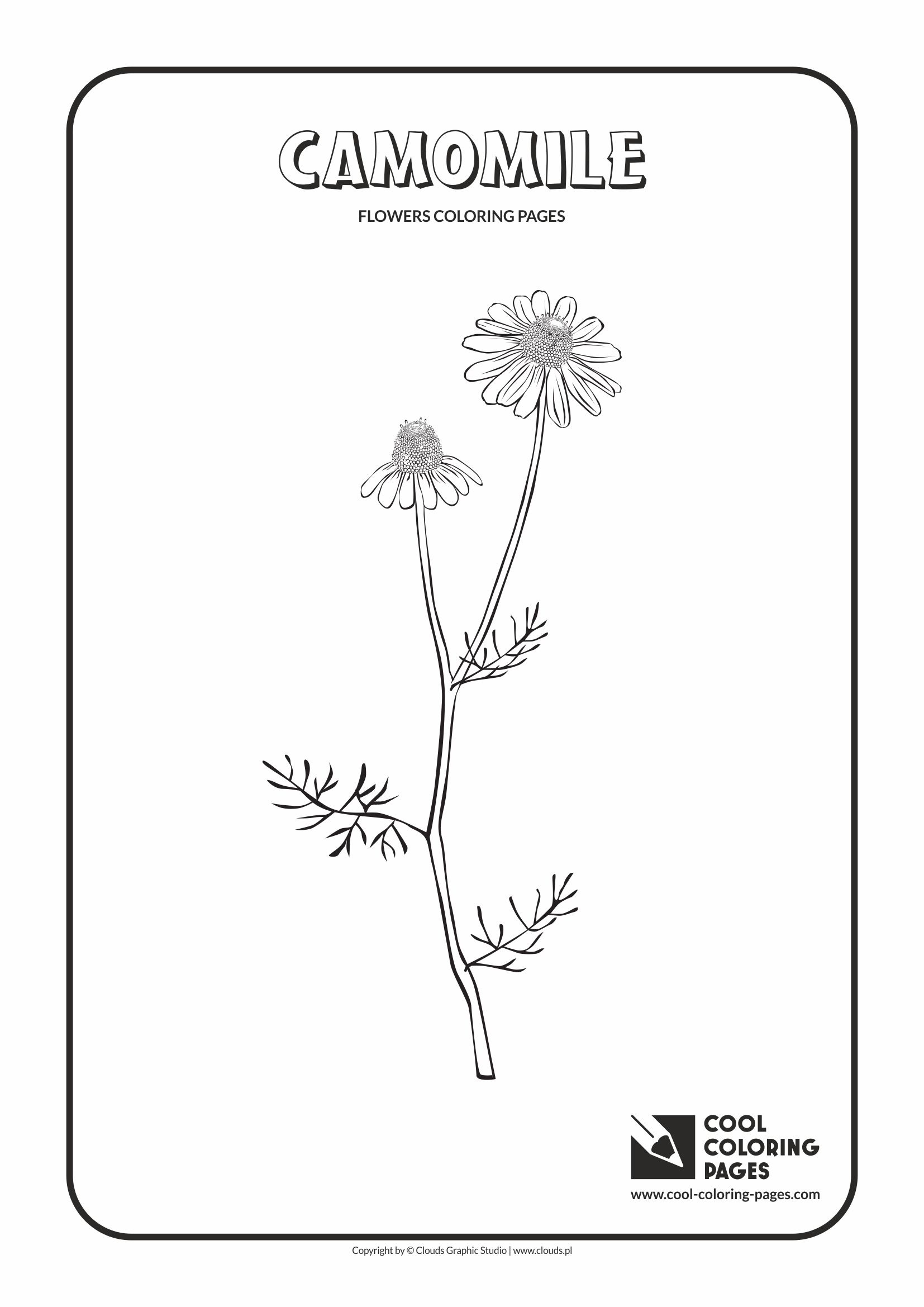 Cool Coloring Pages - Plants / Camomile / Coloring page with camomile