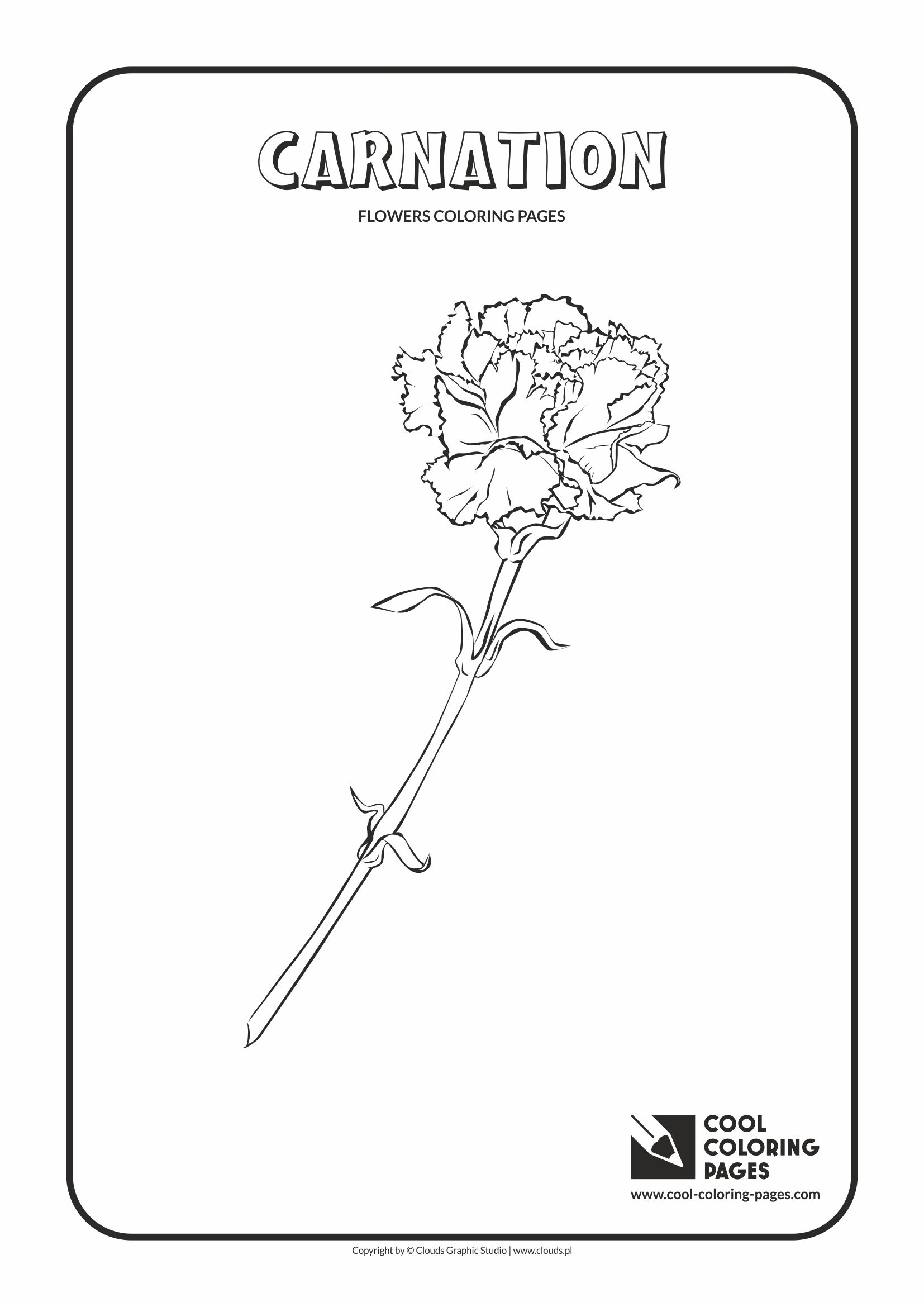 Cool Coloring Pages - Plants / Carnation / Coloring page with carnation