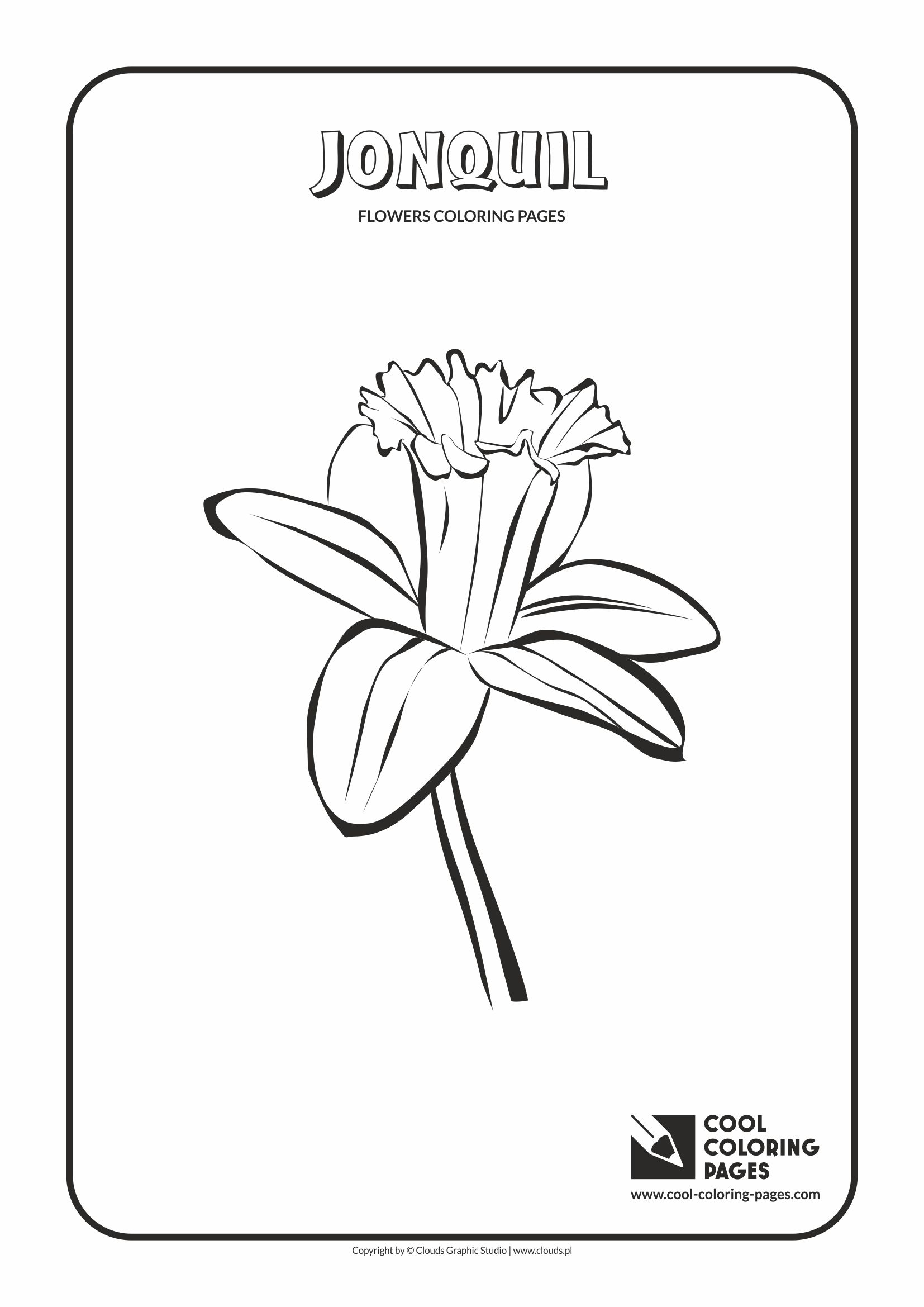 jonquil coloring page cool coloring pages