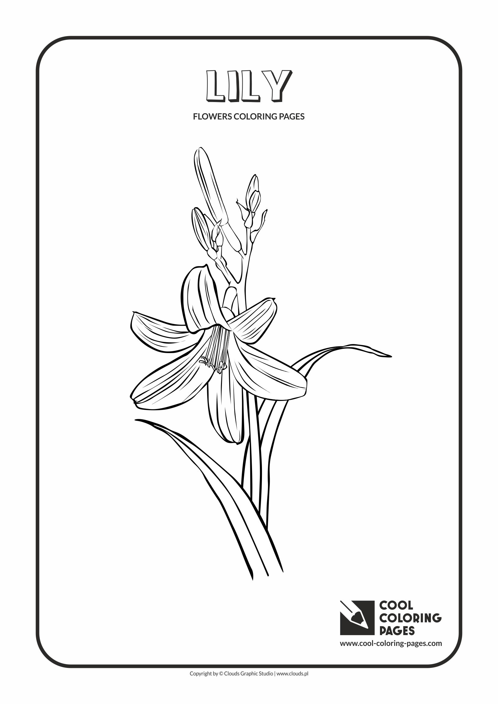 Cool Coloring Pages - Plants / Lily / Coloring page with lily