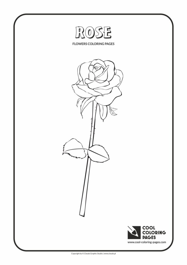 Roses Flowers coloring page | Free Printable Coloring Pages | 1024x724