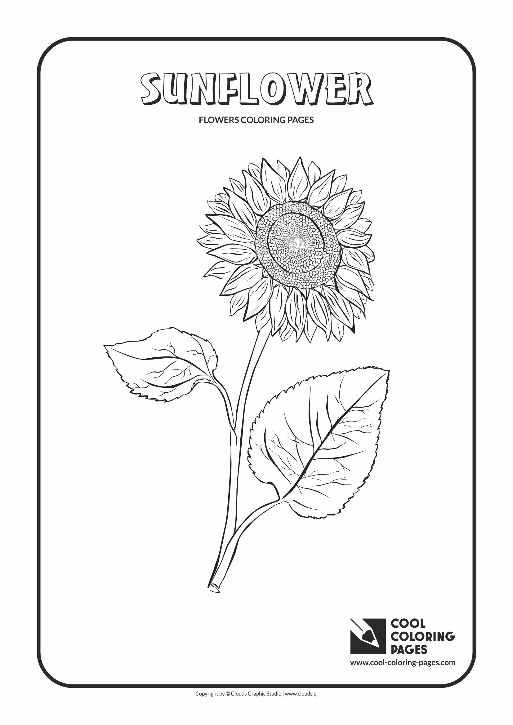 Cool Coloring Pages - Plants / Sunflower / Coloring page with sunflower