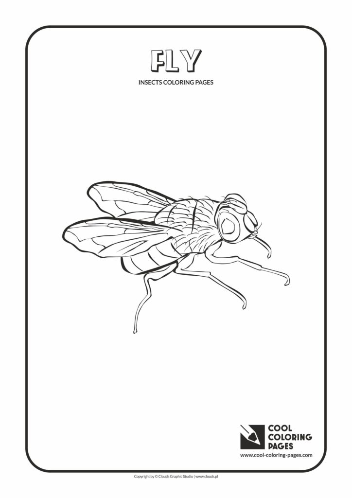 Cool Coloring Pages Fly coloring page - Cool Coloring Pages | Free ...