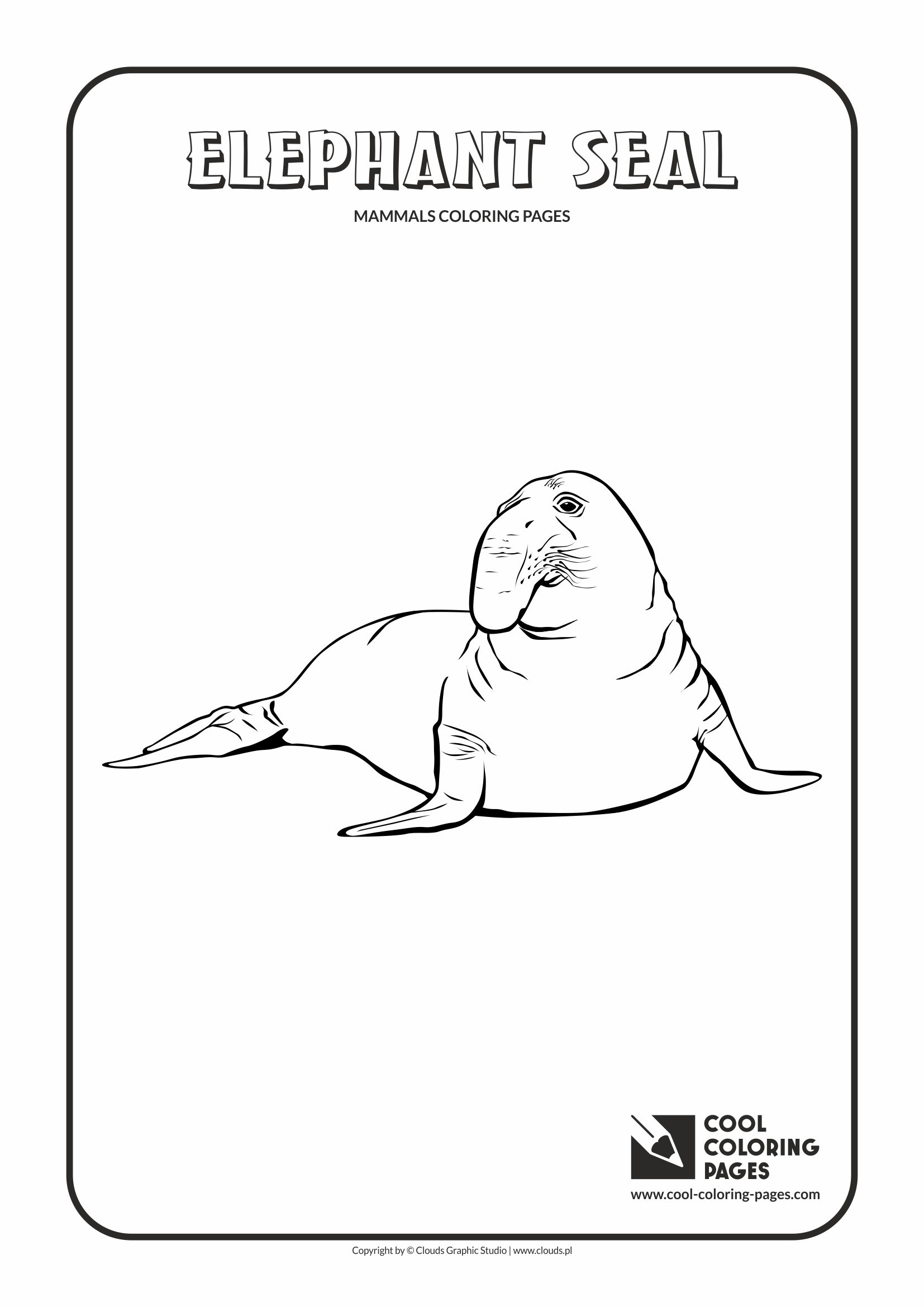 Cool Coloring Pages - Animals / Elephant seal / Coloring page with elephant seal