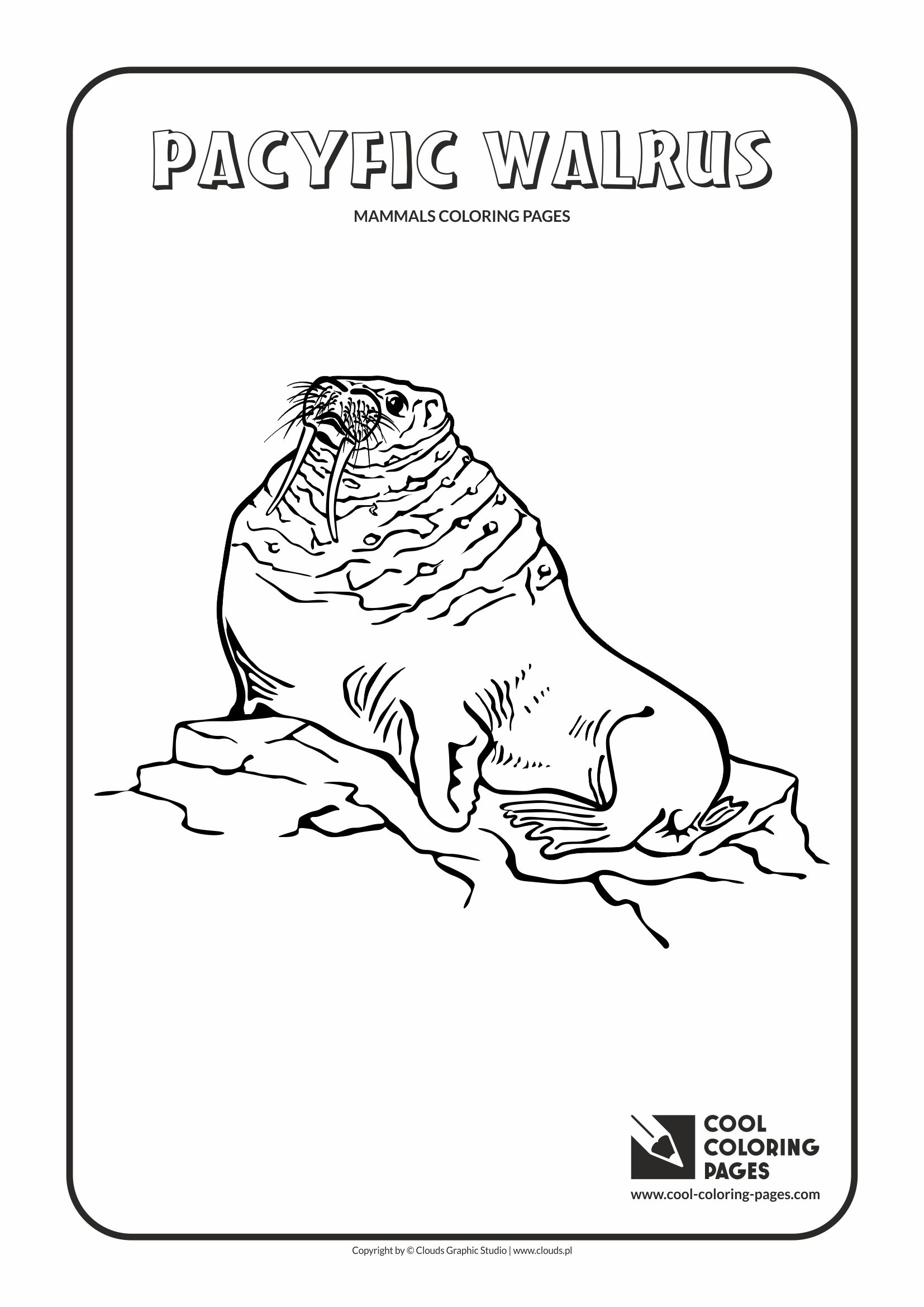 Cool Coloring Pages - Animals / Pacific walrus / Coloring page with pacific walrus