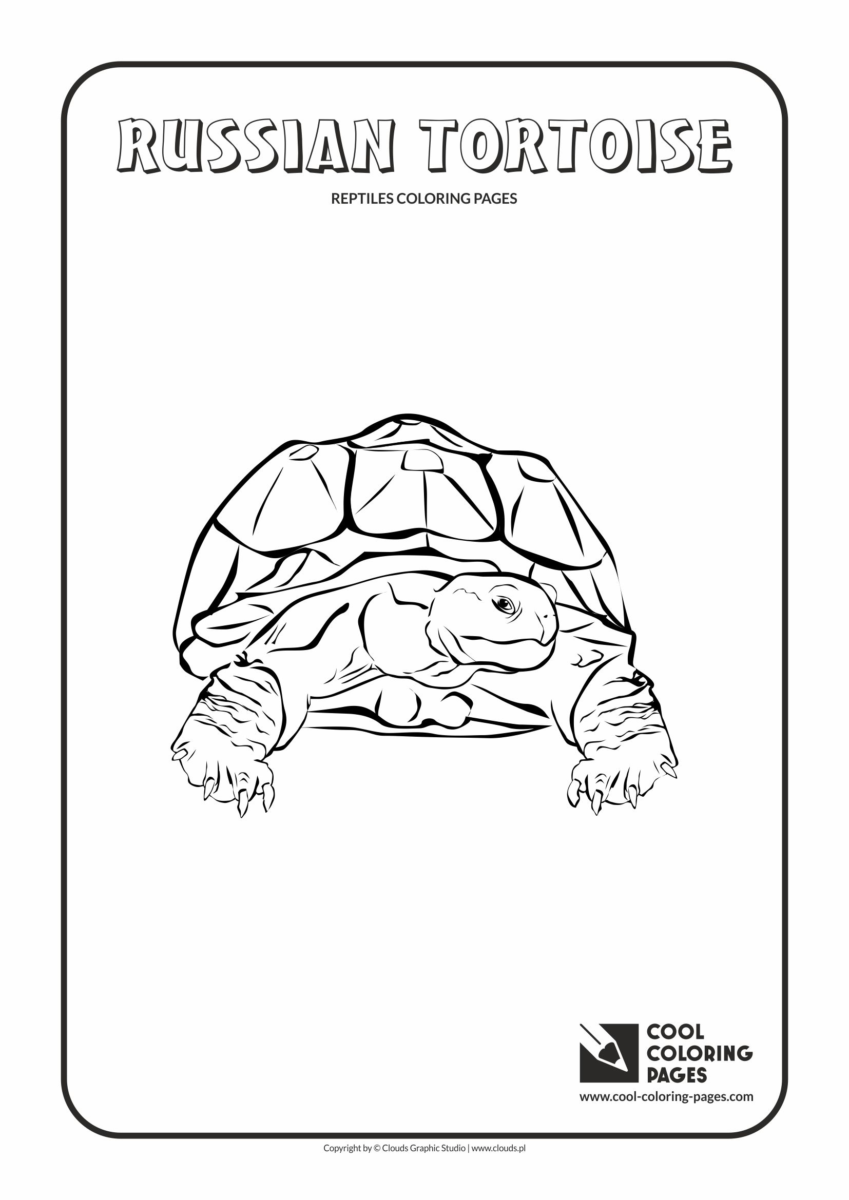 Cool Coloring Pages - Animals / Russian tortoise / Coloring page with russian tortoise